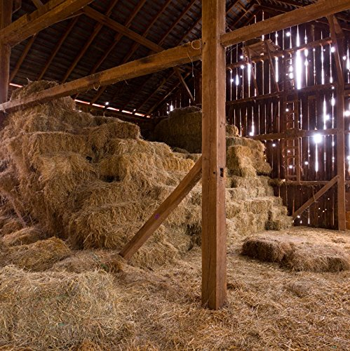 OFILA Old Barn Backdrop 8x8ft Photography Background Straw Hay Church Nativity of Jesus Hayloft Scene Countryside Plank Newborn Baby Theme Photos Party Event Decoration Digital Video Studio (Nativity Scene Background)