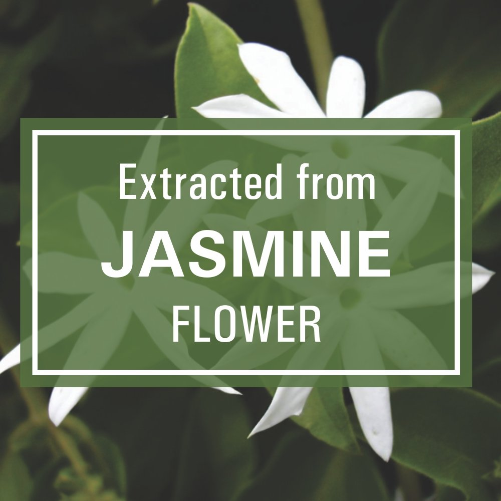 Buy old tree jasmine essential oil for hair skin and acne care buy old tree jasmine essential oil for hair skin and acne care 15ml online at low prices in india amazon izmirmasajfo