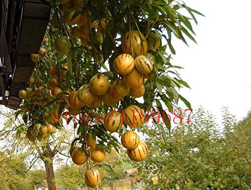 100 Mini süße Melone Samen Melone Baum Non GMO-Bio-Obst und Gemüsesamen für DIY Hausgarten
