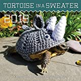 Tortoise in a Sweater 2019 Wall Calendar