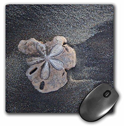"Price comparison product image 3D Rose""Central America El Salvador Sand Dollar On Sand."" Matte Finish Mouse Pad - 8 x 8"" - mp_205308_1"