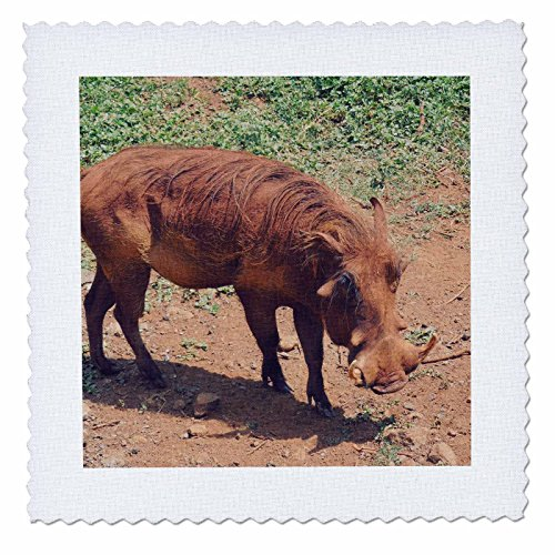 3dRose Sven Herkenrath Animal - A Photo of a Brown Warthog Soft Filter Wildlife Photography - 25x25 inch quilt square (qs_275816_10) by 3dRose