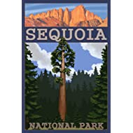Sequoia National Park, California - Sequoia Tree and Palisades (9x12 Art Print, Wall Decor Travel Poster)