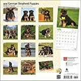 German Shepherd Puppies Calendar 2018 - Deluxe Wall Calendar (12x12)