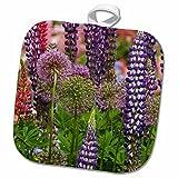 3dRose Danita Delimont - Flowers - Oregon, Salem, Schreiners Iris Garden flowers - US38 BJA0407 - Jaynes Gallery - 8x8 Potholder (phl_93570_1) offers