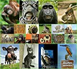 'FUNNY ANIMALS' Postcard set of 20 funny animals, all different images by Edition Colibri / size: 5,8 x 4,1 inch / perfect for Collectors or postcrossing