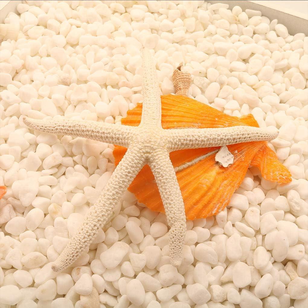 Fgyhtyjuu 5-12cm Naturelle 10-12cm Doigt Blanc /Étoile de mer /él/égant Accueil Mariage Cheveux D/écor et Projet Artisanat