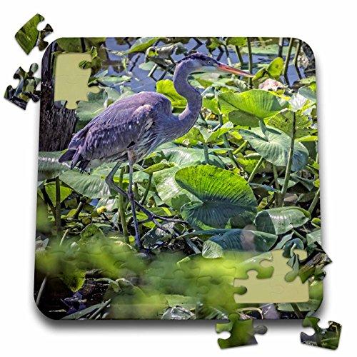 Birds Game Boehm (Boehm Photography Bird - Great Blue Heron - 10x10 Inch Puzzle (pzl_127547_2))