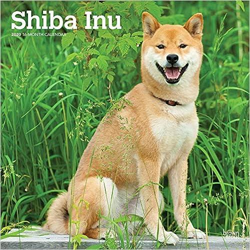 Shiba Inu 2020