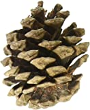 Natural Red Pine Cones 7 Ounces/Pkg-