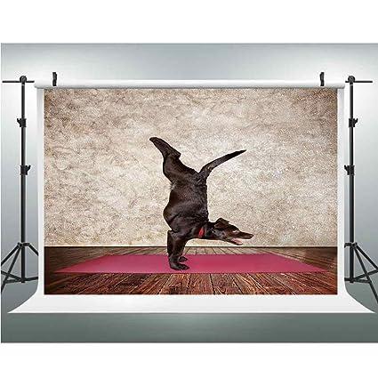 Amazon.com : Background Photography Backdrop Studio Photo ...
