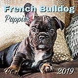 French Bulldog Puppies 2019 Wall Calendar
