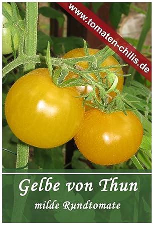 Gelbe Cherry Tomaten Stück Samen 10