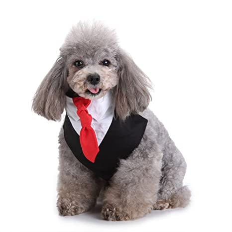 Global Brands Online Formal Perro Tuxedo Perro Pajarita y Cuello ...