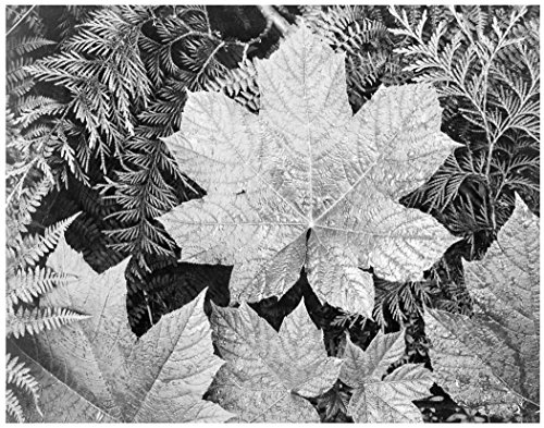 ArtDash® Ansel Adams by Studios. Iconic Black & White Photographs: (Leaves, 11