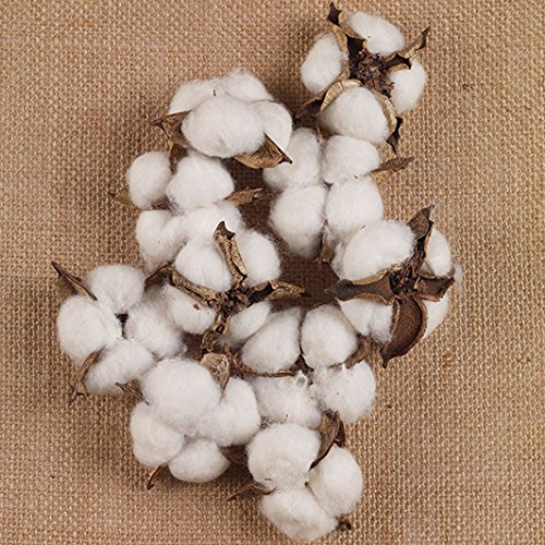 The Country House Collection Cotton Bolls Bunch (10 pods) by The Country House Collection