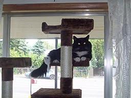 amazon cat feeder