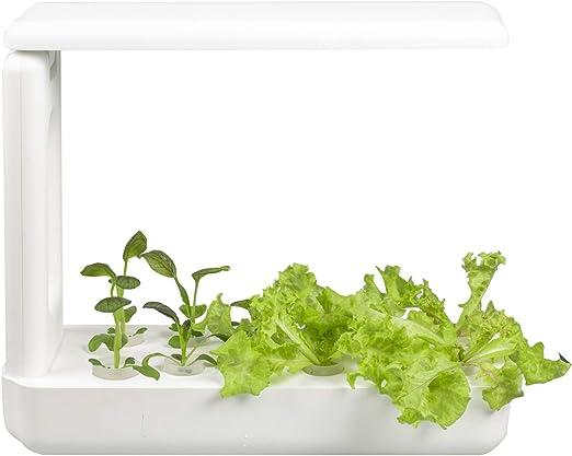 VegeBox Cultivo Hidropónico Interior Kitchen - 12 Hoyos de plantación | Iluminación Inteligente con Temporizador | Cultiva Tus propias Hierbas, Vegetales etc. en tu casa ¡Todo el año!: Amazon.es: Jardín