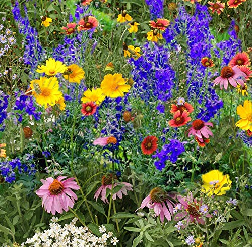 'BUTTERFLIES & BEES' WILDFLOWER SEED MIX - 19 Different for sale  Delivered anywhere in Canada