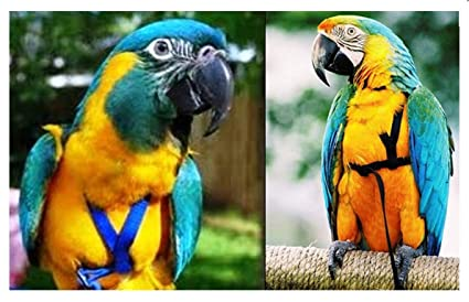 Buy Birds' Park Harness for Macaw Online at Low Prices in