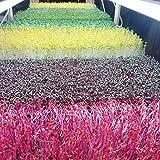 Microgreen Trays Extra Strength No Holes Shallow