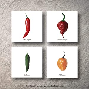 Botanical Prints Wall Decor - Kitchen Art Food Herb Pepper Set UNFRAMED Pictures 4 PIECES Nature Floral Pepper Plant Flower Green Small Botanical Prints Wall Art Vintage Print Poster (12x12)