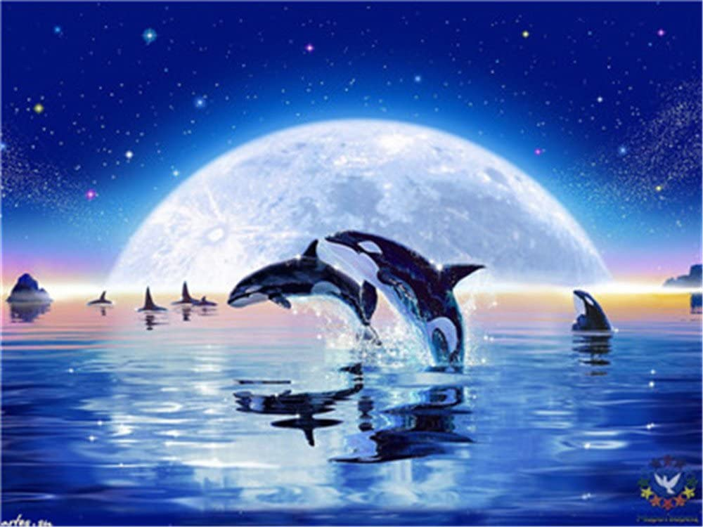Paint by Numbers Kits DIY Oil Painting Home Decor Wall Value Gift - Killer Whale 16X20 Inch (Frame)