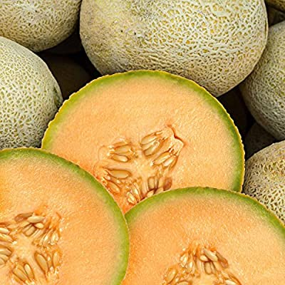 Cantaloupe Melon Garden Seeds - Edisto 47 - Non-GMO, Heirloom, Vegetable Gardening Seeds - Fruit