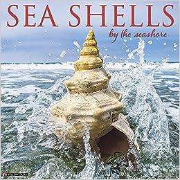 Sea Shells 2018 Wall Calendar Willow Creek Press