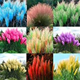 New Pampas Grass Lawn Watch Plants For Farm Gardening plant house 2000+ Seeds