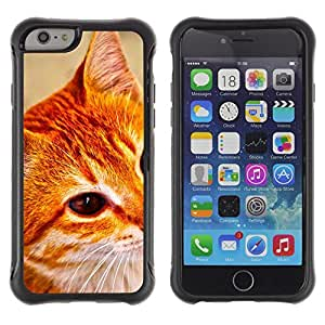 All-Round híbrido Heavy Duty de goma duro caso cubierta protectora Accesorio Generación-II BY RAYDREAMMM - Apple iPhone 6 PLUS 5.5 - Cat Oranage Ginger White Red Mongrel