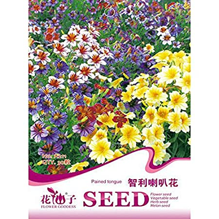 HYPNOS 30 PCS Chile Salpiglossis Sinuate Seed Morning Glory Seeds