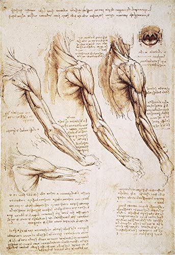 Amazon Com Leonardo Anatomy 1510 Npen And Ink Studies Of The Human Arm Shoulder And Neck By Leonardo Da Vinci C1510 1511 Poster Print By 18 X 24 Posters Prints