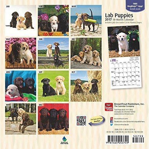 Lab Puppies 2017 Small Wall Calendar Photo #3