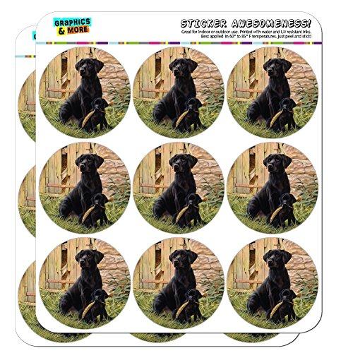 Black Labrador Retriever Dog Puppy 2