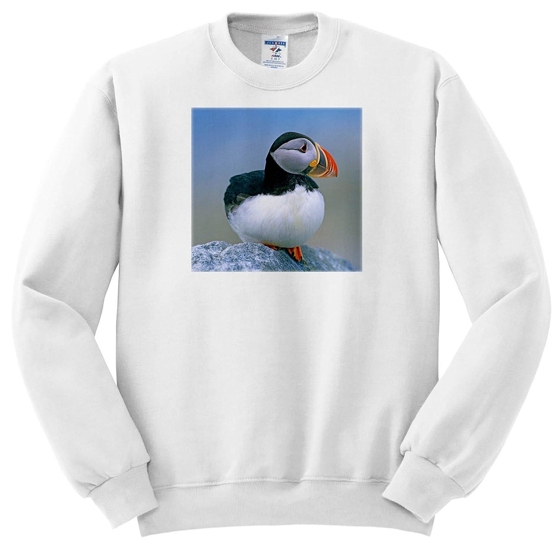 3dRose Danita Delimont - Puffins - Atlantic Puffin Fratercula Arctica, Sitting, Maine USA - Sweatshirts ss_259419