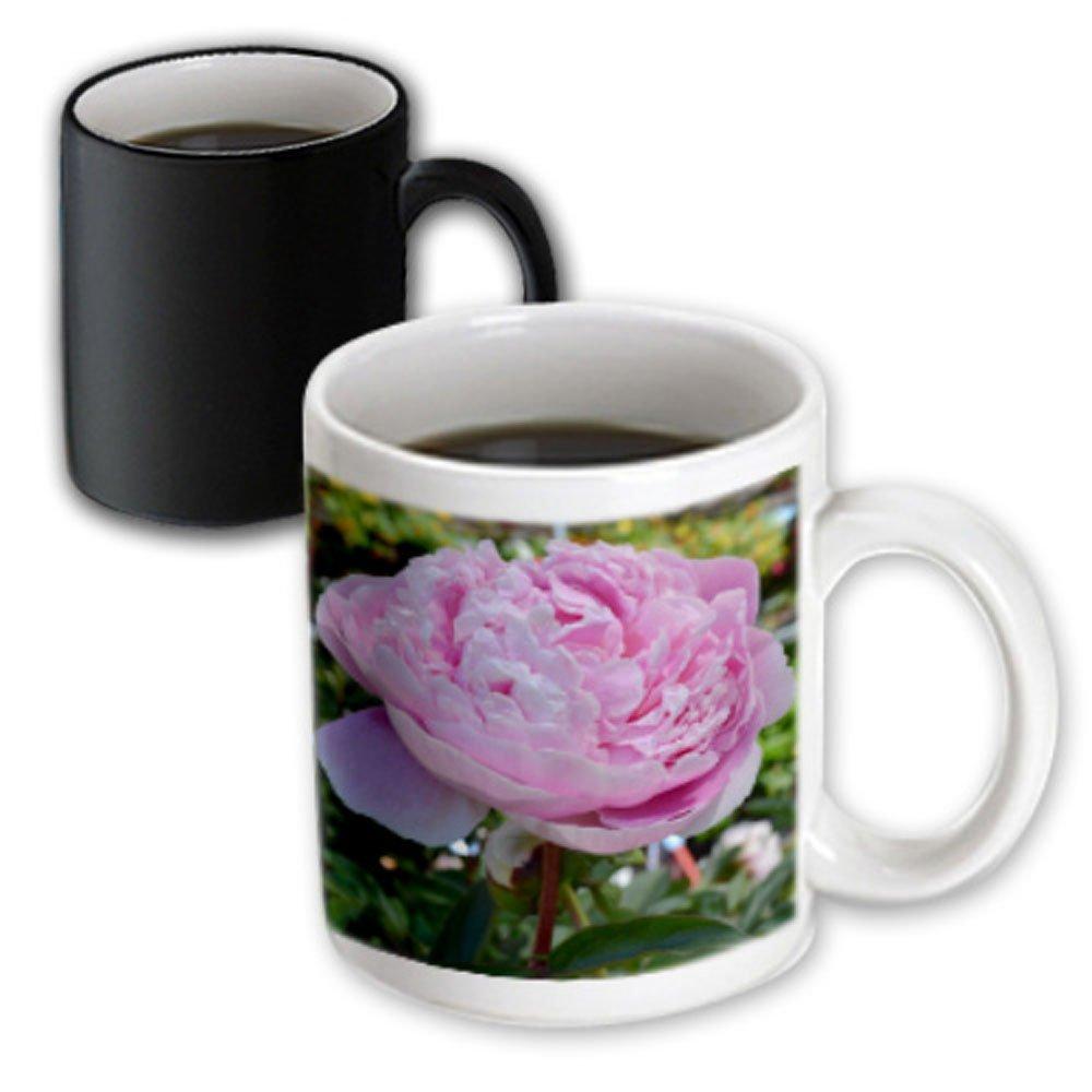 3dRose 27930/_3 Pink Peony Floral Magic Transforming Mug 11 oz Multicolored