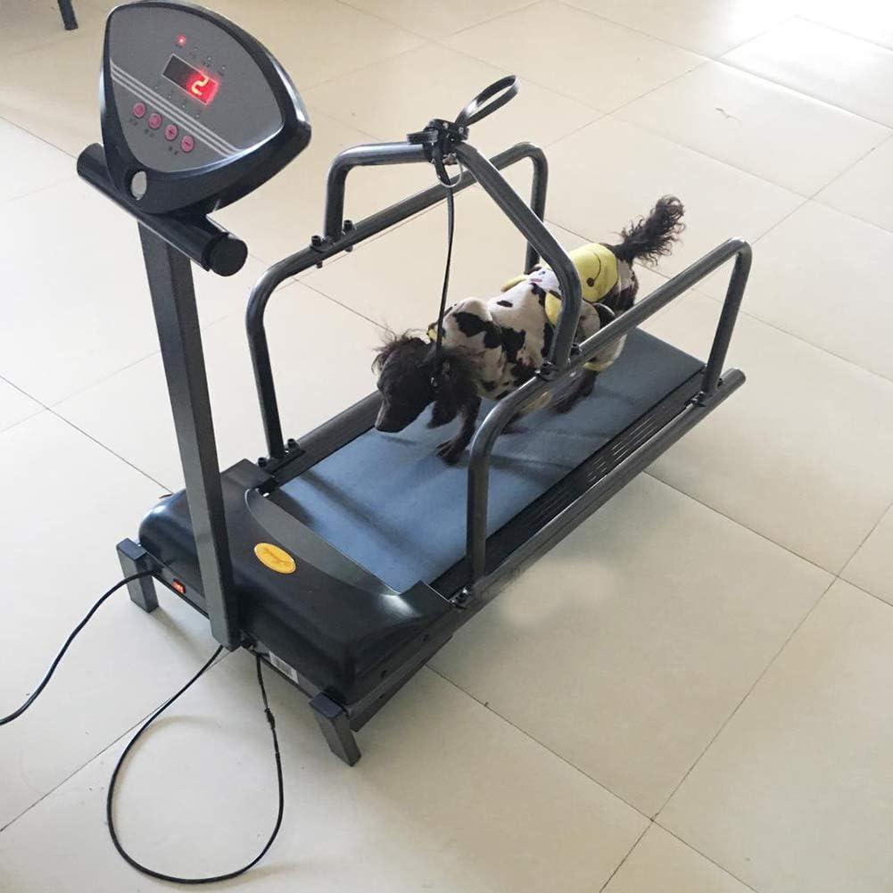QNMM Cinta de Correr para Mascotas Cinta de Correr para Animales ...