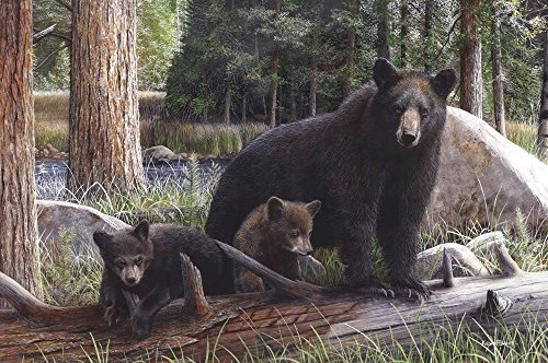 - New Discoveries by Kevin Daniel Art Print Poster, Black Bear and Cubs Size 36 x 24 inches