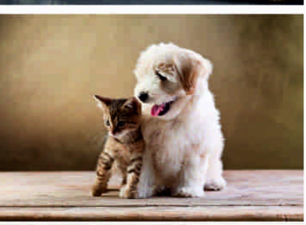 Plaid Per Animali Domestici Modello Amici Colore Biscotto