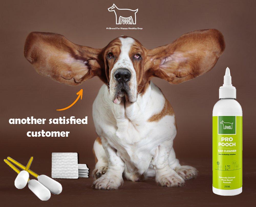 Top 20 Best Dog Ear Cleaners 2019 2020 On Flipboard By