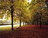 Oil Painting 'Autumn Fallen Leaves In The Garden', 8 x 10 inch / 20 x 25 cm , on High Definition HD canvas prints is for Gifts And Foyer, Game Room And Home Office Decoration, sizes