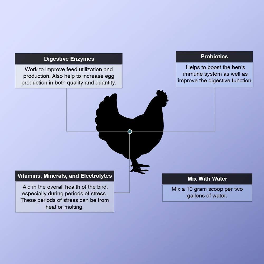 Animal Health Solutions - Hen Boost Probiotics, Help Boost Immunity & Hydration in Full Grown Chickens (8 oz): Garden & Outdoor