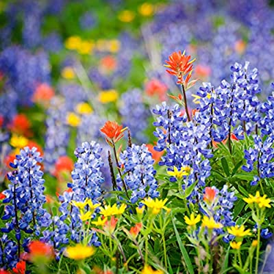 Tennessee Wildflower Seed Mix - A Beautiful Collection of Twelve annuals and perennials - Enjoy The Natural Beauty of Tennessee Flowers in Your own Home Garden : Garden & Outdoor