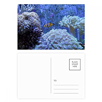 DIYthinker Ocean Coral Ciencia Pez payaso Nature Picture ...
