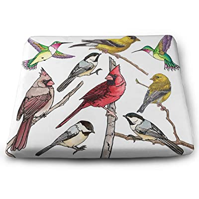 Tinmun Square Cushion, Bird Collection Cardinal Audubon Hummingbird Large Pouf Floor Pillow Cushion for Home Decor Garden Party: Home & Kitchen