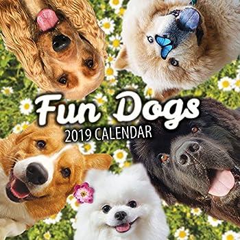 a59b56c10b6a4 Amazon.com   Fun Dogs 2019 Dog Wall Calendar   Office Products