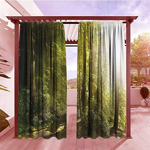 (DGGO Outdoor Rod Pocket Curtains Nature Sunny Rainforest with Wood Bench in Olympic National Park Washington USA Photo Energy Efficient, Darkening W96x72L Green Yellow)