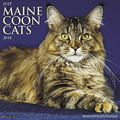 2018 Just Maine Coon Cats Wall Calendar