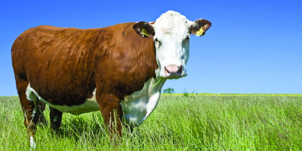 Nature's Seed 2 Acre Great Plains Beef Cattle Pasture Blend